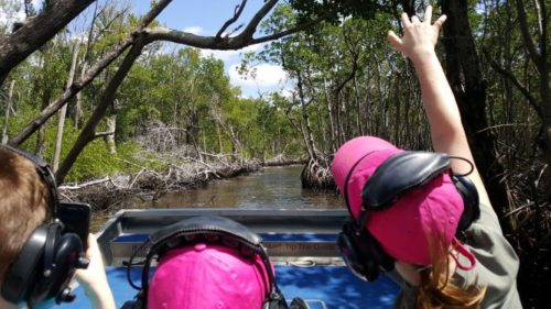 Everglades Airboat Tour through State Park nature